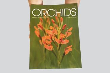 Silver - Scientific & Technical  Orchids, Volume 84, No. 10