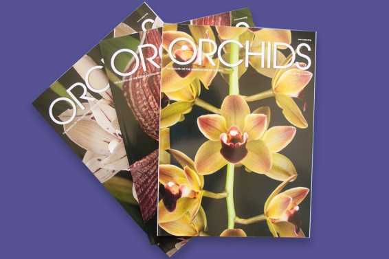 Award of Excellence-Web Magazine Series  Orchids