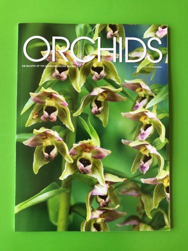 Orchids December 2017 – Web Magazines, Periodicals & Publications